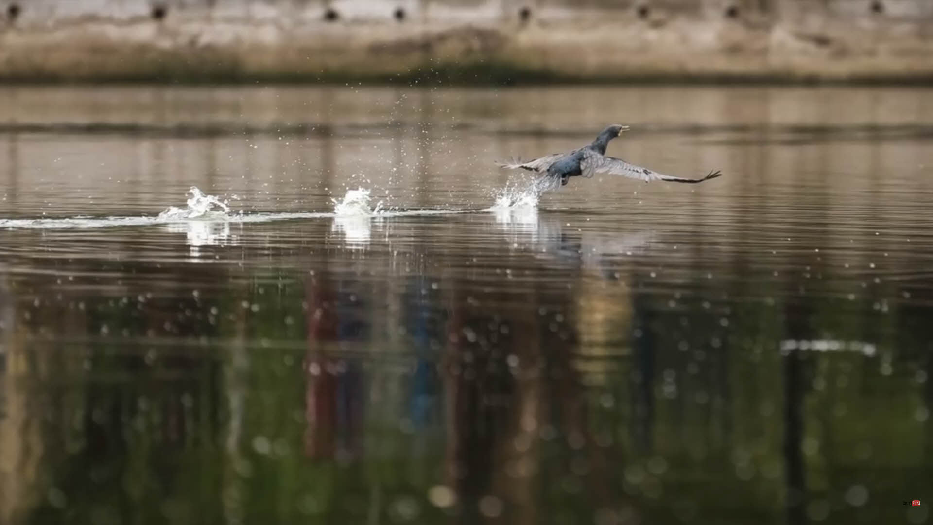 動態的飛鳥使用連續對焦追蹤模式,可以增加對焦成功機率
